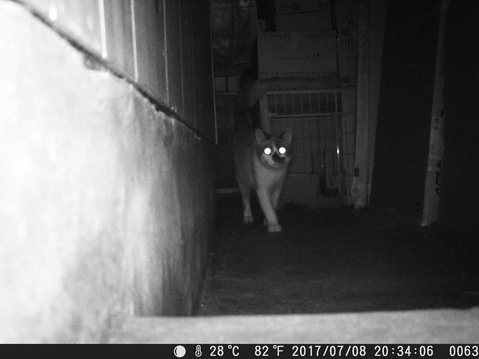 Enkeeo・0.2秒の圧倒的撮影速度、動いた瞬間を逃さず撮影・赤外線LED48個搭載のハイスペックトレイルカメラ